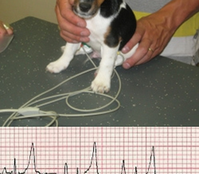 Animal Care vet  - Cardiologie