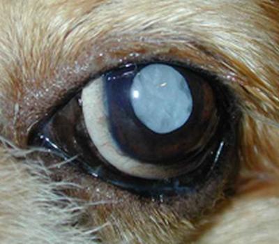 Animal Care vet  - Opthalmologie