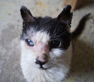Animal Care vet  - Besmettelijke ziekten