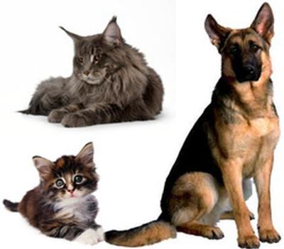 Animal Care vet  - Vaccinaties